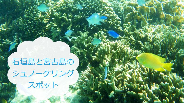 【シュノーケリング】石垣島と宮古島、シュノーケリングするならどこ?